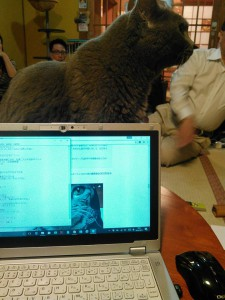 座談会中も猫はおかまいなし。